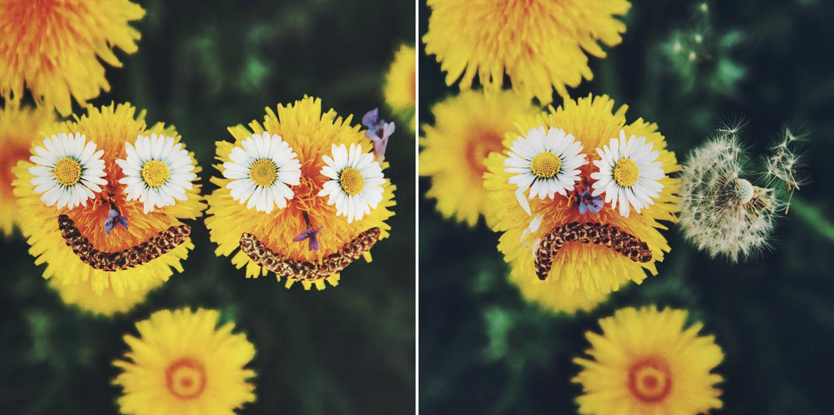 dandelion lovestory