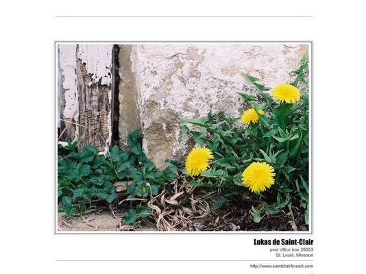 dandelions/door