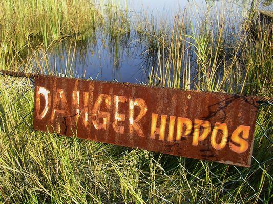 Danger Hippos!
