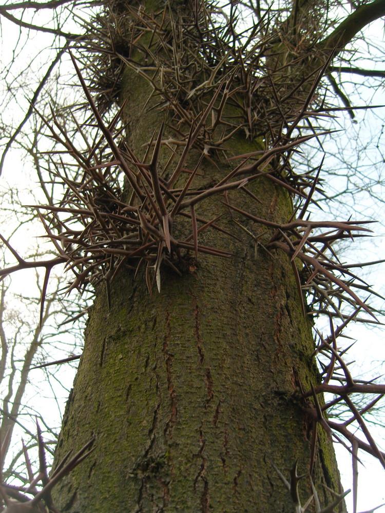 danger tree...^^