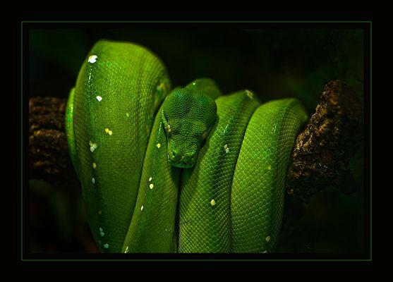 >>> dangerous green <<<