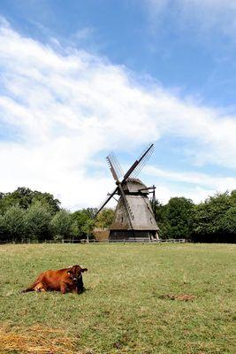 Danish Landscape
