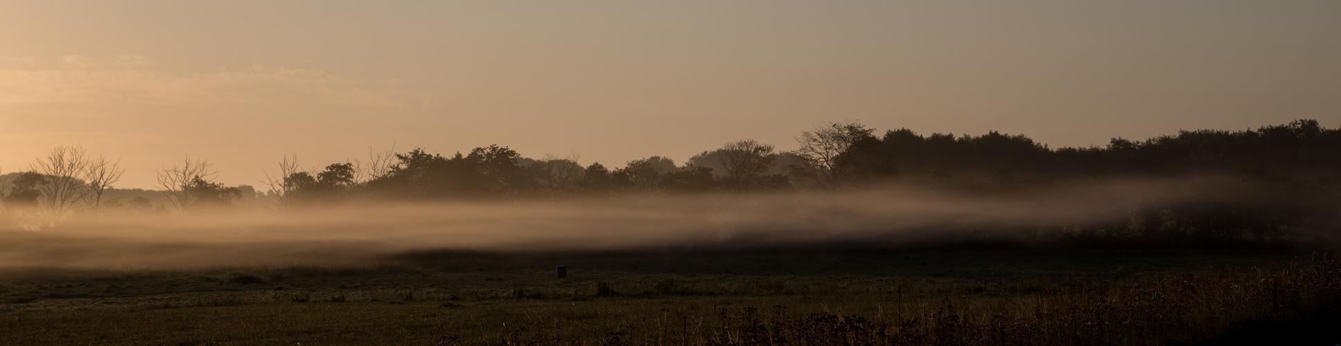 Danish Mist