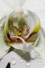 dank meinem kürzlich zugelegten Makro finde Ich die Blütenweld noch schöner.