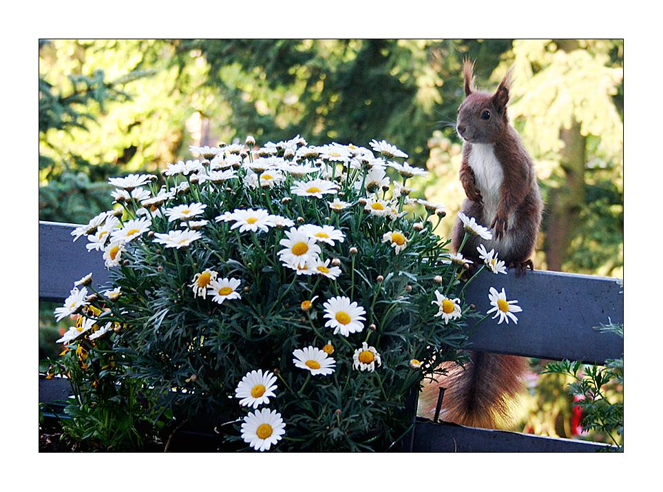Danke für die Blumen (1)