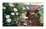 Danke für die Blumen (2)
