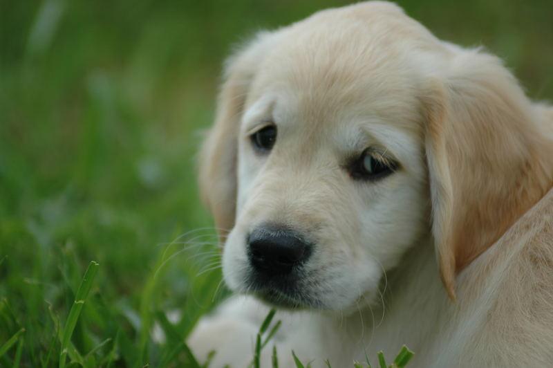 Danke kleiner Hund