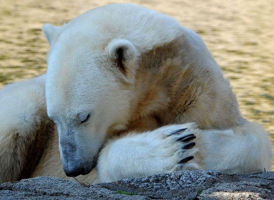 Danke Knut