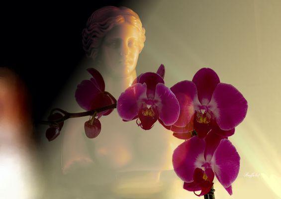 ...dann durch die Blume.