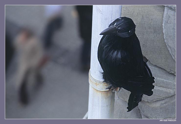 Dann zeig' ich eben auch mal ein Vogelbild ...