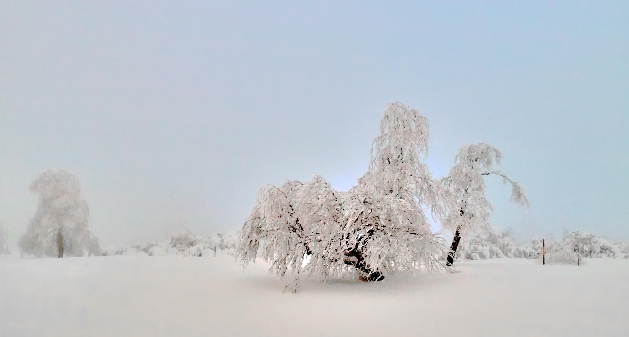 dans la brûme - Im Nebel