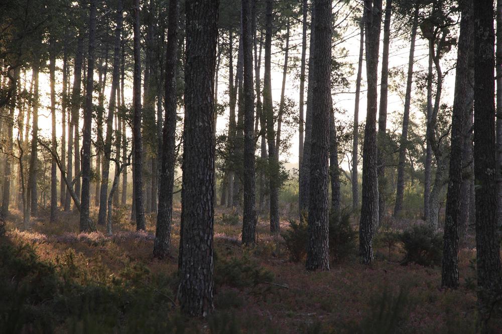 dans la forêt !!!