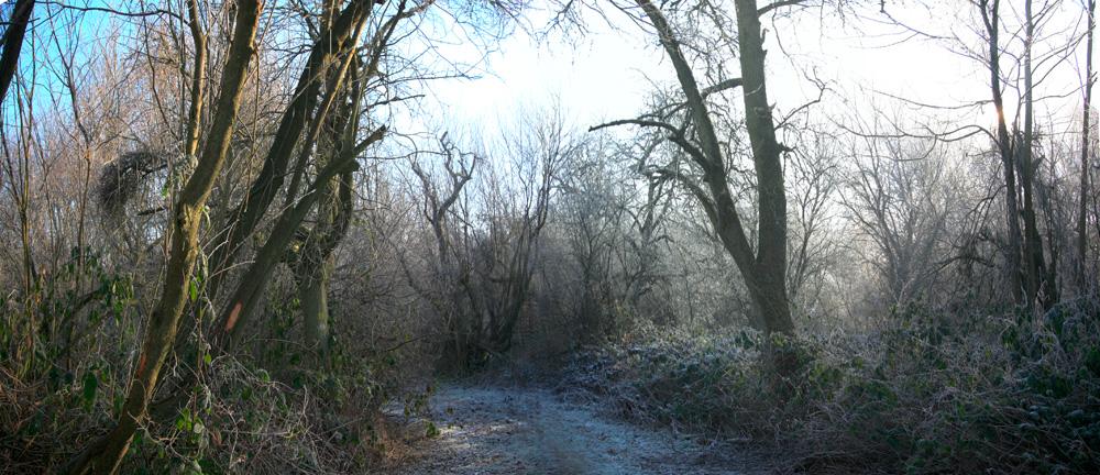 Dans la forêt.....