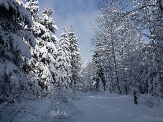 Dans la forêt des Bois du Jorat (Suisse - Vaud)