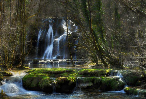 Dans la forêt des fées