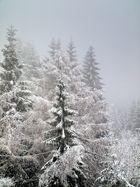 Dans la forêt hivernale - Im Winterwald