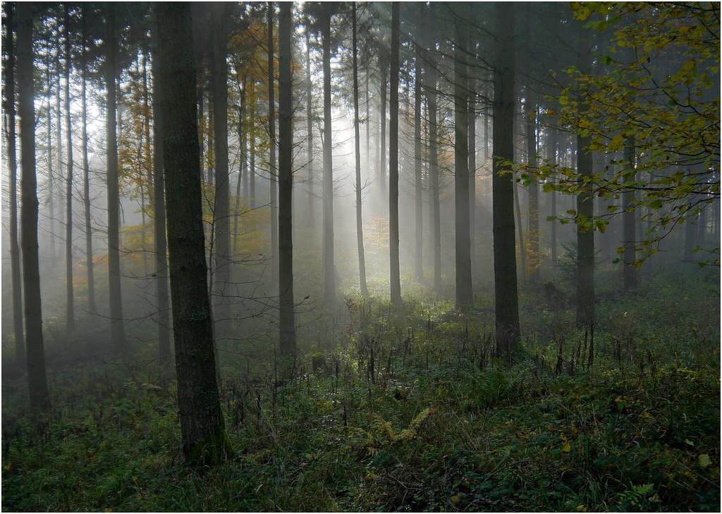 Dans la forêt lointaine