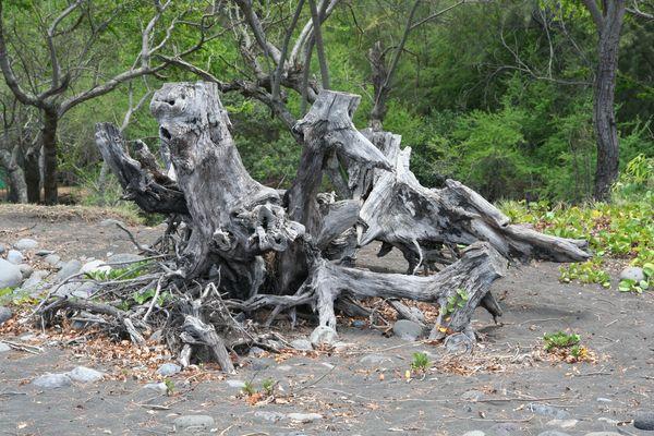 Dans la forêt .. place à l'imagination