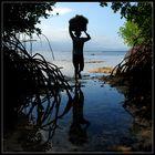 Dans la sombre fraicheur de la mangrove...