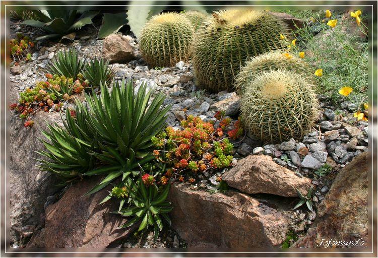 dans la vallée des cactus