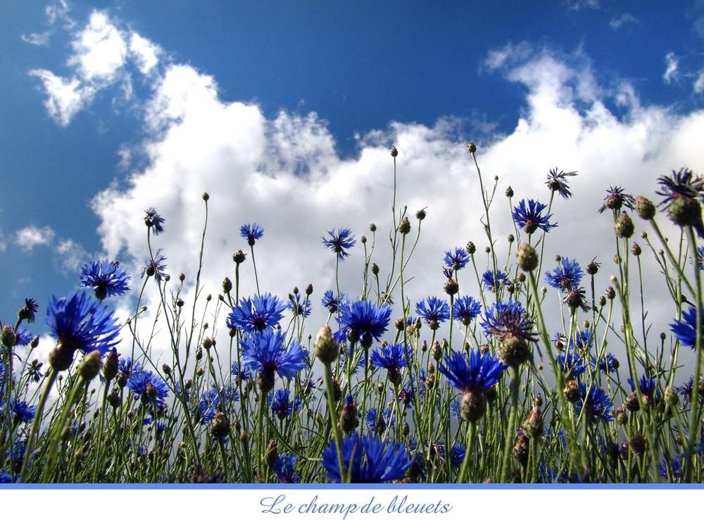 Dans l'attente de leur floraison ............