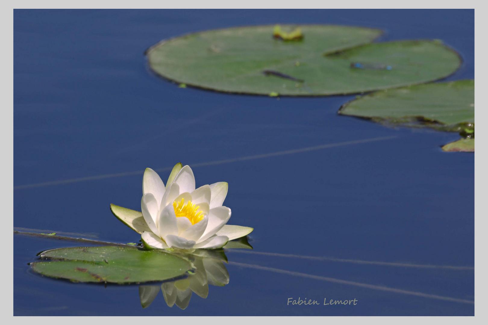 Dans le bassin du temple de l'amour