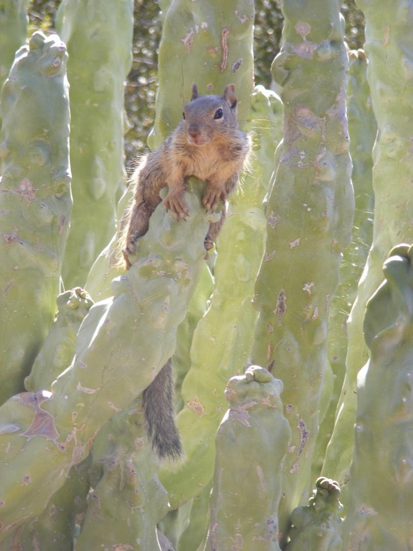 Dans le cactus