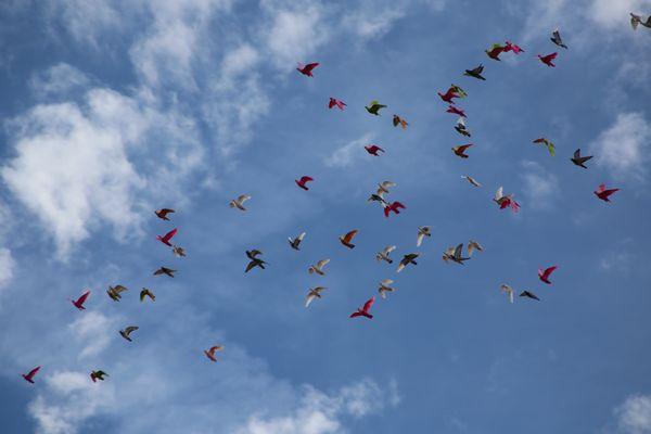 Dans le ciel de Salamanque. Les oiseaux peints !