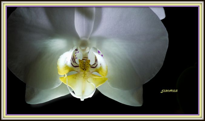 Dans le coeur d'une orchidée
