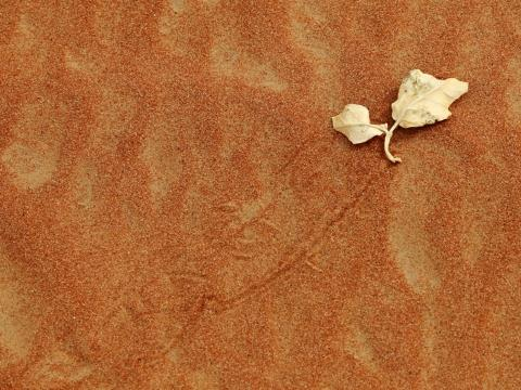 Dans le desert des emirats,poussee par le vent.