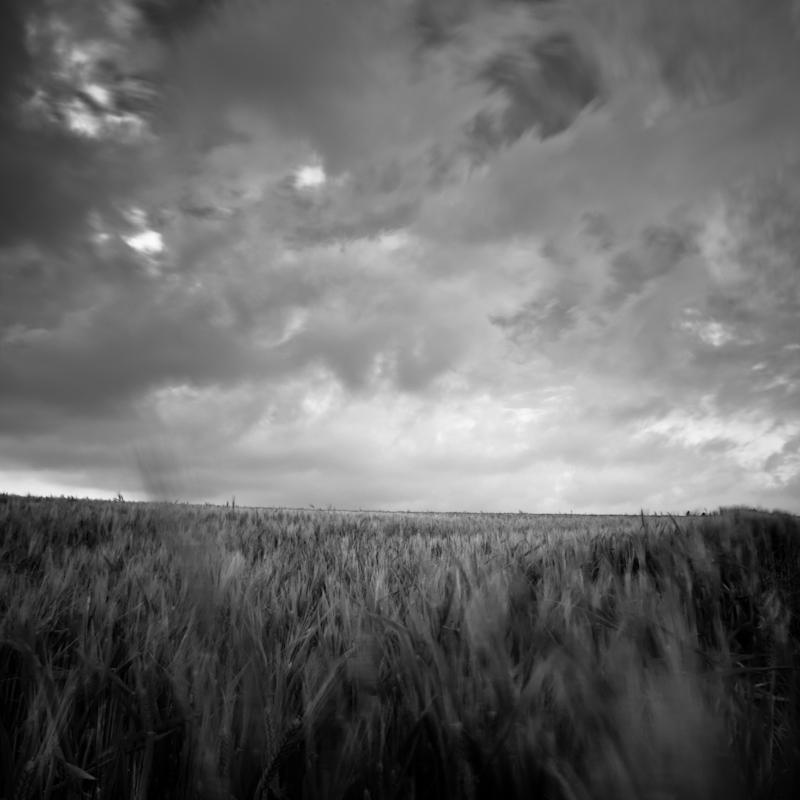 Dans le flou des blés