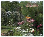 Dans le jardin d'ma mère ....