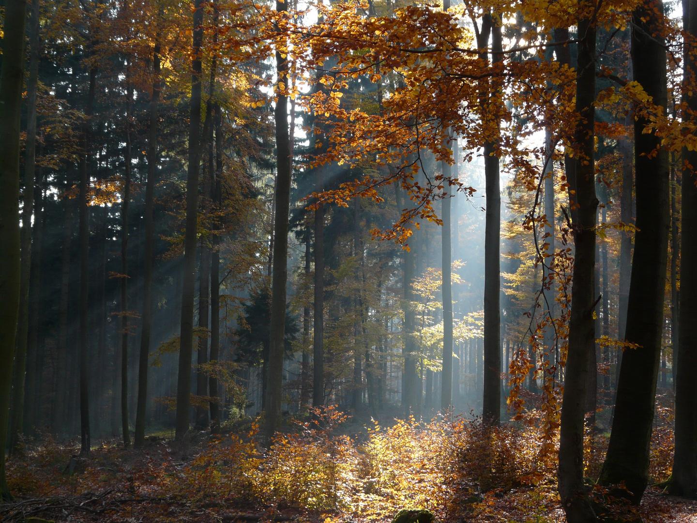 Dans le parc naturel du Spessart (Allemagne)