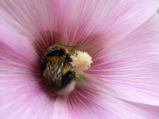 dans le ventre d'une fleur