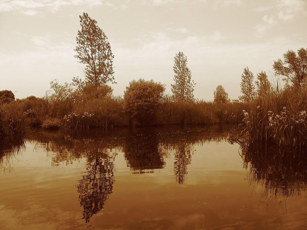 dans les marais