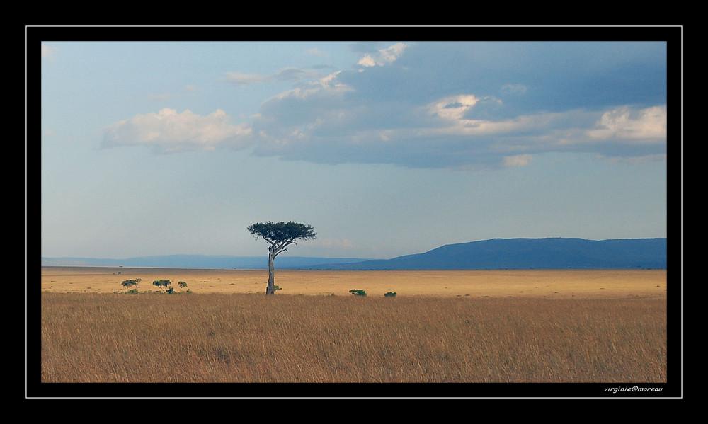 Dans les plaines du Masai Mara