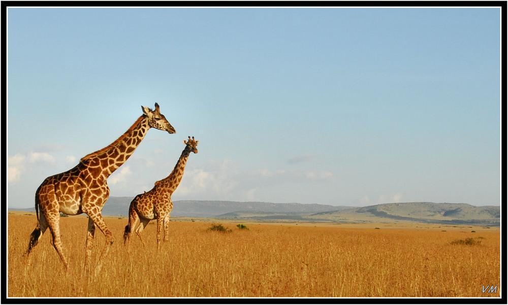 Dans les plaines du Masai Mara...