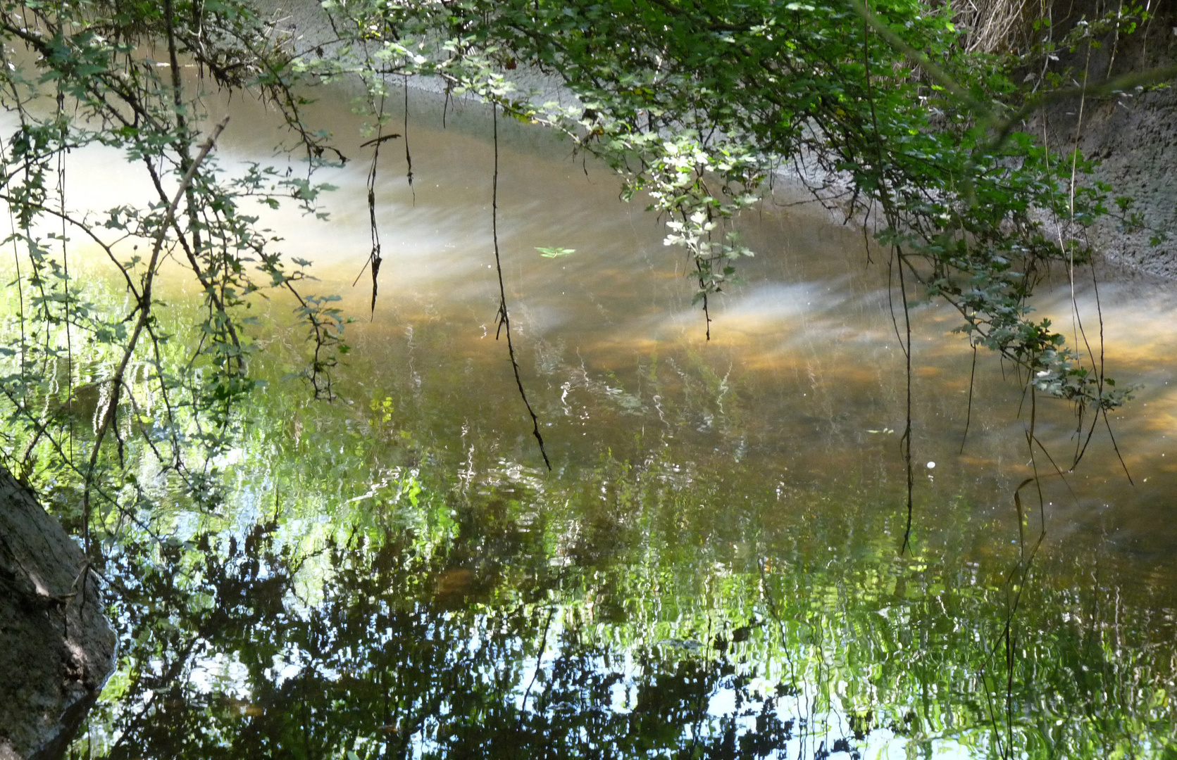 Dans les secrets du ruisseau.