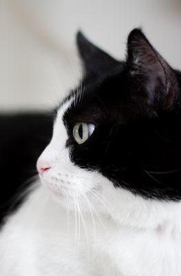 Dans l'oeil du chat