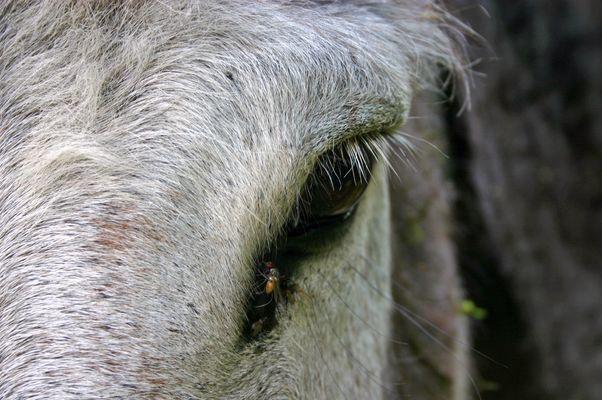 Dans l'oeil d'un âne!