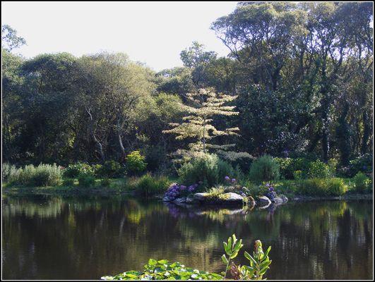 Dans mon jardin d'hiver........ Parc botanique de Cornouaille