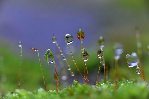 Dans mon jardin pendant la pluie.