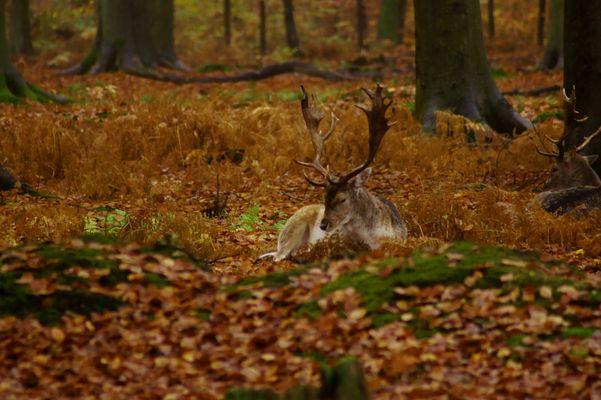 Dans sa maison un grand cerf ...