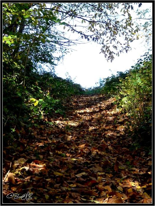 Dans un chemin d'automne