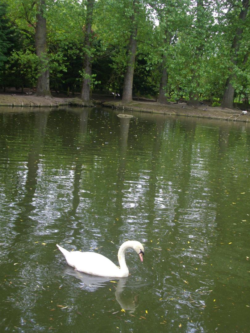 Dans un Lac...