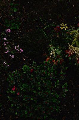 Dans un quasi jardin japonais