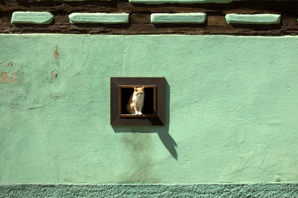 Dans un village alsacien,chat perché