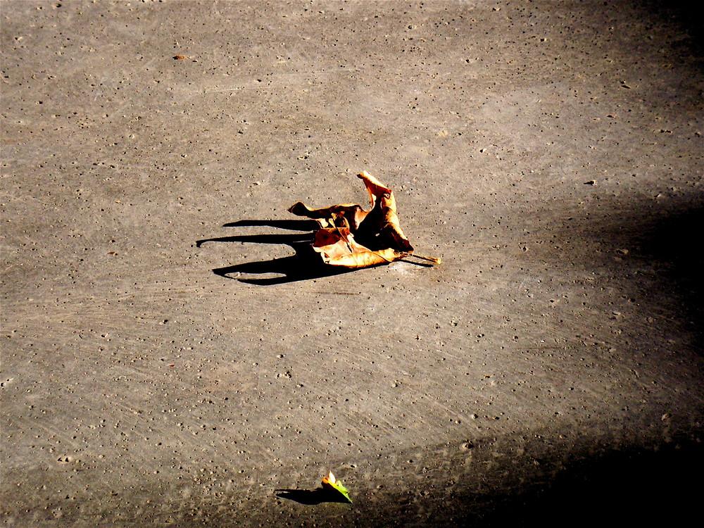Danse de l'automne