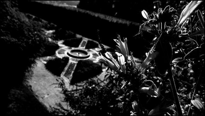 dans°le.jardin