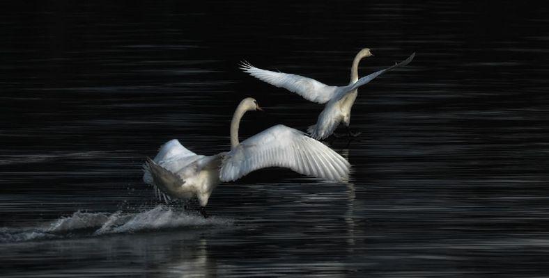 Danza sull'acqua